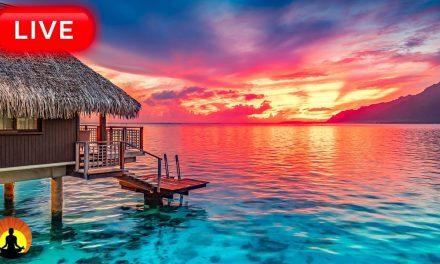 Relaxing Music 24/7, Calm Music, Meditation Music, Yoga, Healing Music,